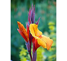 It's NOT a Bird of Paradise (Flower) Photographic Print