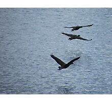 Duck Squadron Photographic Print