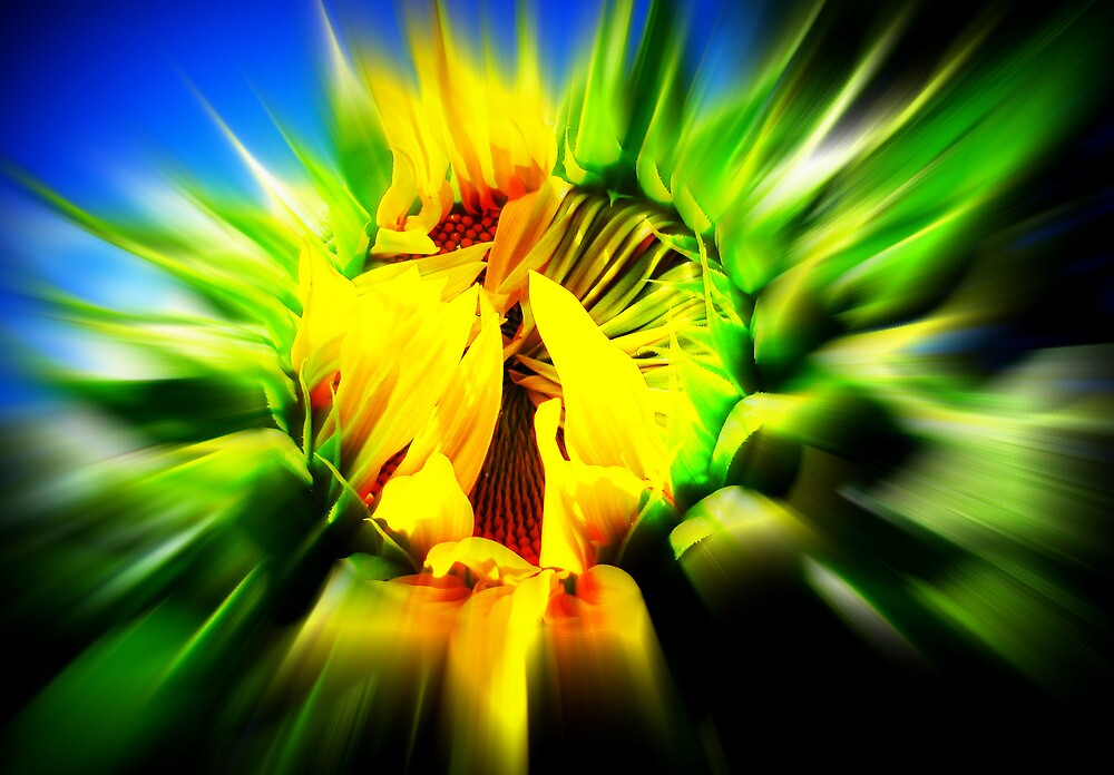Sunflower Power by Debbie Robbins
