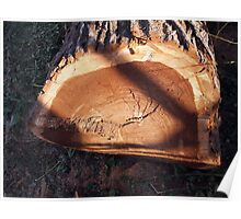 Felled tree trunk closeup Poster