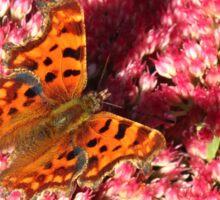 Comma Butterfly on Sedum Sticker
