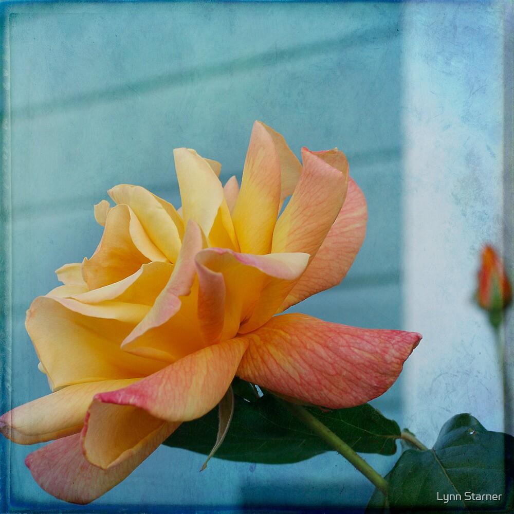 Yellow Rose by Lynn Starner