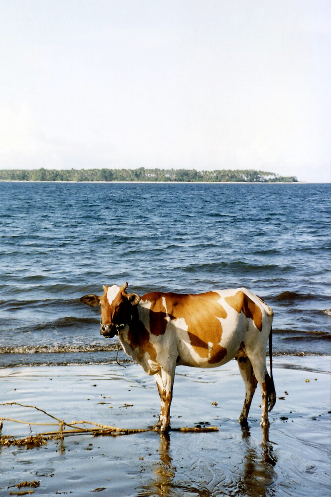 Cow on the Beach, Halmahera, Moluccas, Indonesia by Jane McDougall