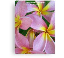 Candy Pink Frangipani - Femininity Canvas Print