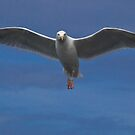 the sea gull by jean-jean