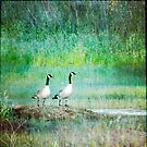 Two Geese by Lynn Starner