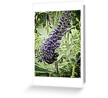 Honey Bee on Purple Flower at Powell Gardens Greeting Card