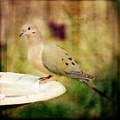 Mourning Dove by Lynn Starner