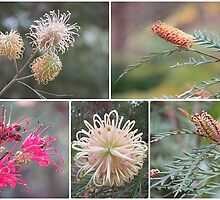 ~ Grevilleas ~ by Donna Keevers Driver