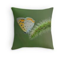 perching on the bristlegrass  Throw Pillow