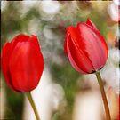 Red Tulips by Lynn Starner
