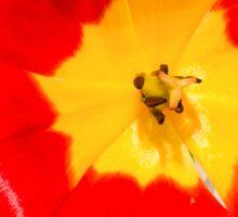 Tulip Sticker