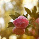 Pink Flowers by Lynn Starner