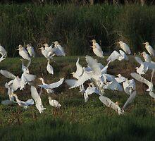 Circling Flock by byronbackyard