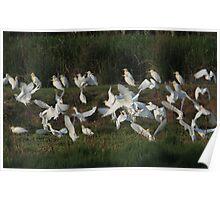 Circling Flock Poster