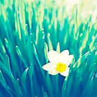 Daffodil in Spring by Krisztian Sipos