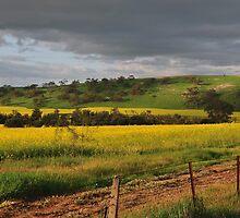 Canola Fields Toodaya by HG. QualityPhotography