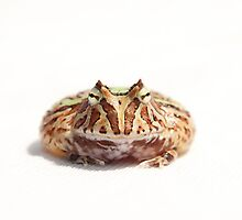 fantasy horned frog by tamphoto