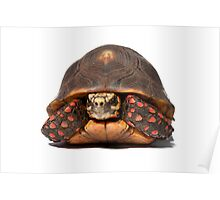 Red Foot Tortoise Poster