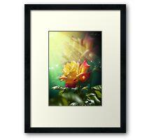 Juicy Rose Framed Print