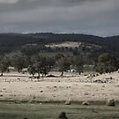 The shades of rural NSW by Mark Elshout