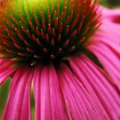 The heart of a flower by Shienna