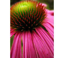 The heart of a flower Photographic Print