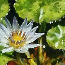 Waterlily in the style of Monet by David Carton