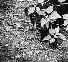 Black Dog Peeking Around a Bush, Black and White by PhotosByTrish