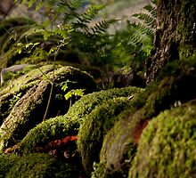 Light on Moss Covered Wall by Adam Webb