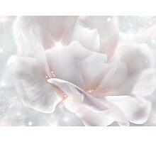 Surprise Rose Photographic Print