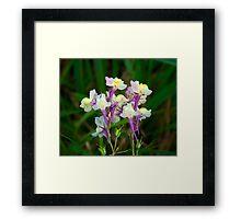 Wild flower in the last summer day Framed Print