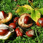 Colourful conkers! by weecritter