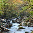 Mountain Stream by Gary L   Suddath