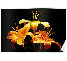 golden lily flowers Poster