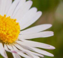 ~ Ladybug ~ Sticker