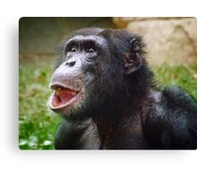 Derpy Chimpanzee Looking Up with Mouth Open Canvas Print