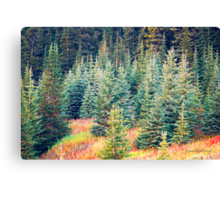 Autumn at Bow Lake is showing it's colour -  Jasper National Park - Alberta Canvas Print