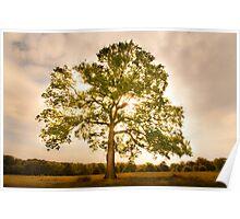 Tree, Tatton Park, Cheshire.  Poster