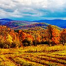 Furrows Mountains and Foliage by Rick Gold