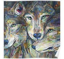 Gray wolves Poster