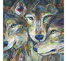 Gray wolves Photographic Print