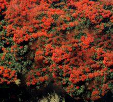 Red Ficifolia Tree with border, Princes Way, Drouin  Sticker