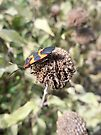 Ugly Bug on a Dried up Dead Flower by Barberelli