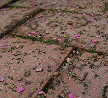 Sprinkles of love by Ashli Amabile