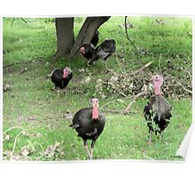 A Bunch of Wild Turkeys in the Forest Poster