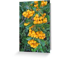 Berries in Autumn Greeting Card