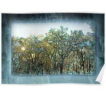 Winter Dawn Treetops Poster