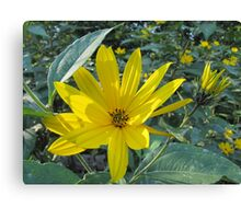 Nature´s Beauty Canvas Print