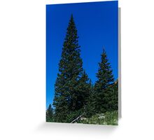 Tree Cones in Nature Greeting Card